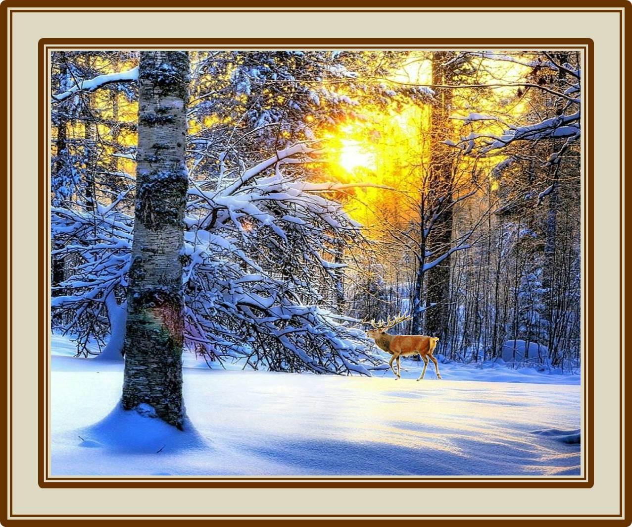 Il colore dell inverno e nella fantasia come un vecchio for Il gatto inverno