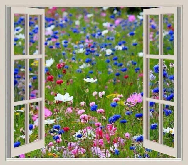 primavera alla finestra